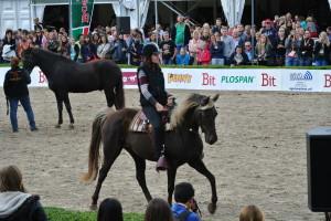 Horse Event 2013