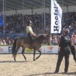 Horse- event